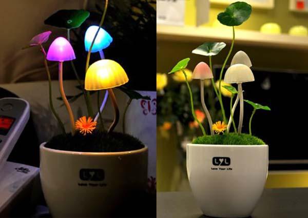 Leuchtende Pilze als Lampe