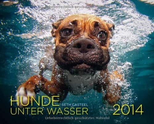 Hunde unter Wasser Kalender 2014